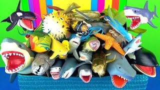 Learning Sea Animals Names for Kids Learn Sharks Whales Fish Jaws Kids Video - Educational Toys