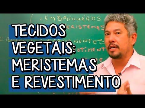 Tecidos Vegetais: Meristemas e Revestimento - Extensivo Biologia | Descomplica