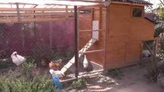 getlinkyoutube.com-Курятник своими руками. Chicken house with their hands