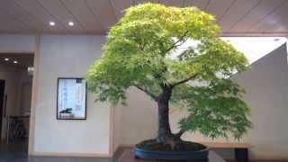 getlinkyoutube.com-Bonsai - One of the greatest Bonsai Authority in Omiya is Mr. Tomio Yamada.