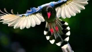 getlinkyoutube.com-أذكار الصباح رائعه جدا ماشاء الله Morning Azkar دعاء