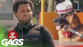 getlinkyoutube.com-Dog Sells Hot Dogs
