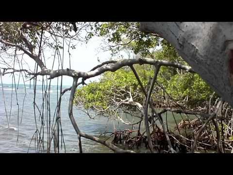 Reserva Natural Punta Cucharas – Ponce – Puerto Rico – Parte XI