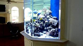 getlinkyoutube.com-HUGE FISH TANK (Custom 1500 Gallon Coral Reef Aquarium)