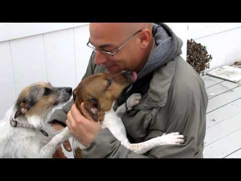 Afghanistan Homecoming!! Jack Russel Dogs and Dad!