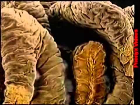 O Corpo Humano - 08 - Sistema Digestório