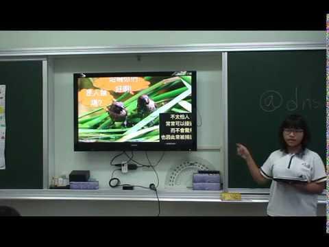 探索斑文鳥 - YouTube