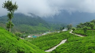 getlinkyoutube.com-Munnar, Kerala - God's Own Country. Panasonic Lumix FZ1000 Video.