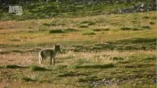 getlinkyoutube.com-Арктика. Тундра. Ледяная пустыня. Гренландия