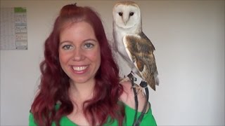How to bond with your owl // bonding techniques