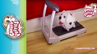 getlinkyoutube.com-Chubby Puppies treadmill workout!