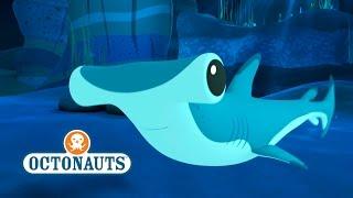 getlinkyoutube.com-Octonauts: Hammer Head Sharks In Trouble
