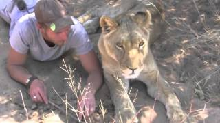 getlinkyoutube.com-Man is reunited with lion he raised when it was a cub