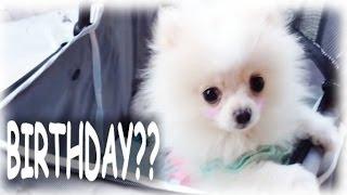 It's Mango's Birthday Vlog