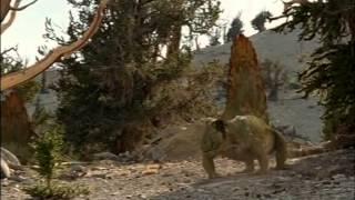 getlinkyoutube.com-documentales bbc caminando con monstruos vida antes de los dinosaurios