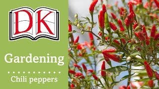 getlinkyoutube.com-Gardening: How to Grow Chili Peppers