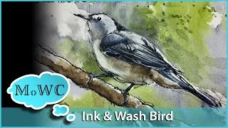 getlinkyoutube.com-Line and Wash Watercolor Bird Painting– White Breasted Nuthatch