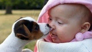 getlinkyoutube.com-Hunde Und Babies Sprechen Miteinender [HD VIDEO]