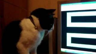 getlinkyoutube.com-Los gatos tambien se asustan.flv