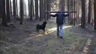 getlinkyoutube.com-Rottweiler Video.