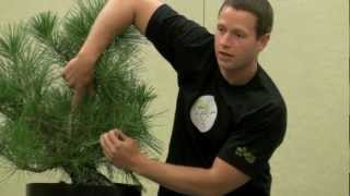 getlinkyoutube.com-Ryan Neil Black Pine Demo and Lecture - BSF Convention