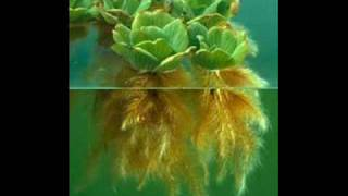 getlinkyoutube.com-Plantas Acuaticas