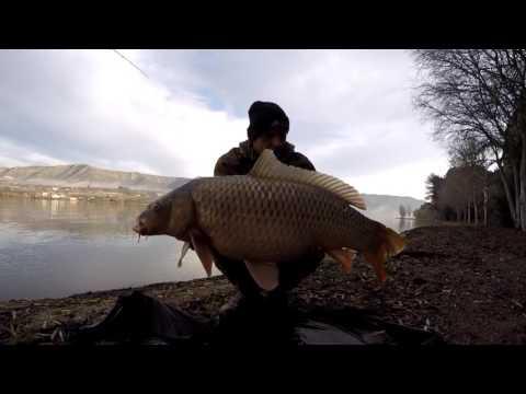 Pontyhorgászat az Ebro folyón Bundik Zsolttal.