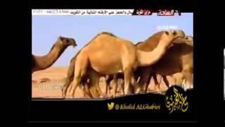 getlinkyoutube.com-شيلة يا اهل الابل اداء صالح اليامي و طاير الشوق