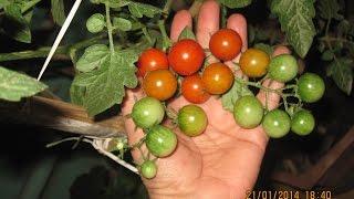 getlinkyoutube.com-Organic Terrace Gardening