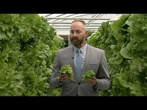 The future of farming - Vertical, hydroponic crops