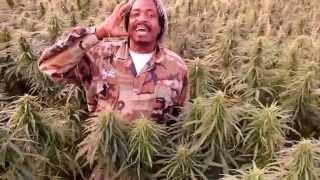 Yah Meek - The Herb