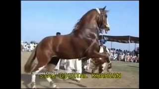 "getlinkyoutube.com-""BATALLA DE CABALLOS BAILADORES"" PAQUISTAN vs MEXICO"