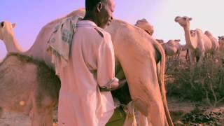 getlinkyoutube.com-Pastoralism