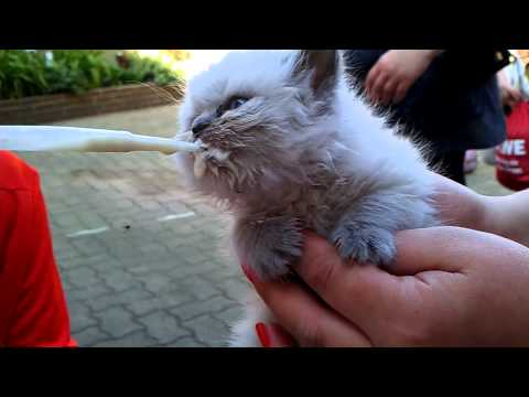 Baby Cat Drinking Milk  *sweet*/ Katzenbaby
