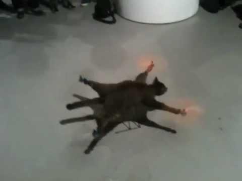 Mačka koja leti