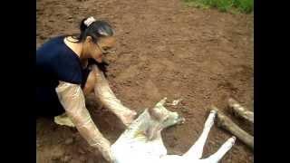getlinkyoutube.com-completo mulher toma coice da vaca violento na cabeça 2012 original  oficial