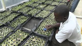 getlinkyoutube.com-Haïti: Francois Benoit: du tireur d'élite aux salades hydroponiques