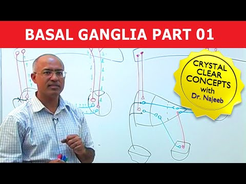 Basal Nuclei - Ganglia part 1 of 3