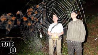 getlinkyoutube.com-Top 10 Biggest Spiders In The World