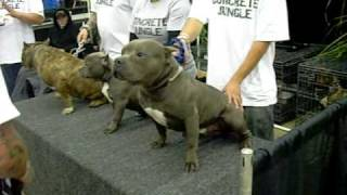getlinkyoutube.com-feb7th dog show in san bernardino 2009 video 3