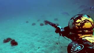 getlinkyoutube.com-Spearfishing with the Beuchat Rocksea Competition Spot suit