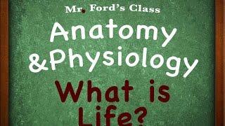 Introduction Human Anatomy Physiology