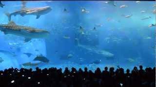getlinkyoutube.com-130317《沖繩美麗海水族館鯨鯊餵食秀》