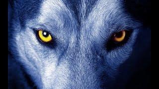 getlinkyoutube.com-Lobos alfa y omega, lucha con un equipo ganador