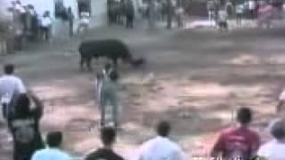 getlinkyoutube.com-หมาใจเด็ด สู้กับ วัวกระทิง  madotube   YouTube