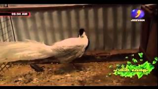 getlinkyoutube.com-Documentary on Ornamental fishes, Exotic Birds and Fancy Pigeons Part 2