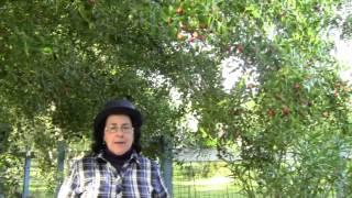 getlinkyoutube.com-La pianta del giuggiolo