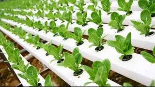 getlinkyoutube.com-Hydroponic Gardening - Grow Organic Plants Fast