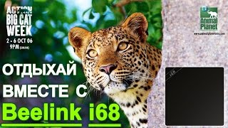 getlinkyoutube.com-Замена спутниковому тв- Приставка Смарт ТВ на Android Beelink i68  - Часть 1 Обзор