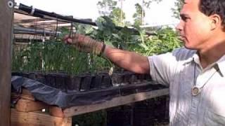 getlinkyoutube.com-DIY Homemade Hydroponic Vertical Garden and Urban Farm in South Florida